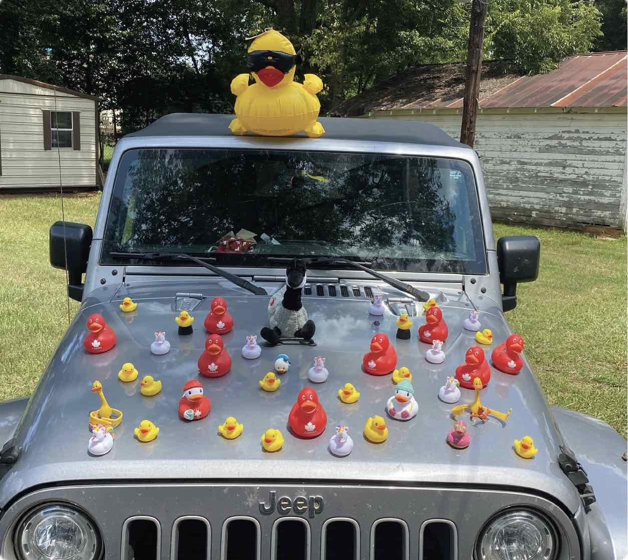 ducks on jeep